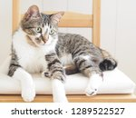cat sitting on the chair   Shutterstock . vector #1289522527