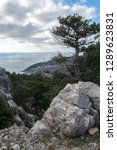 pine on the rocky coast of... | Shutterstock . vector #1289623831