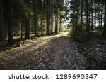 dirt road in a bright sunlit... | Shutterstock . vector #1289690347