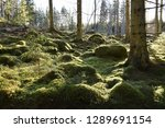 beautiful green mossy forest... | Shutterstock . vector #1289691154