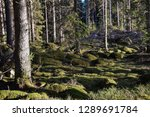 green mossy ground in a... | Shutterstock . vector #1289691784