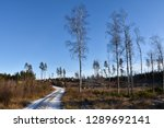 bright woodland with a winding... | Shutterstock . vector #1289692141