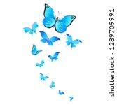 beautiful butterflies  blue... | Shutterstock . vector #1289709991