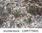 grass and dry leaves under the... | Shutterstock . vector #1289775601