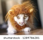Stock photo funny cat dressed up as a lion 1289786281