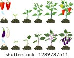 set of life cycles of... | Shutterstock .eps vector #1289787511