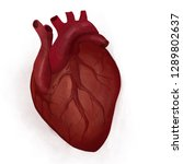 humans heart in real life  | Shutterstock . vector #1289802637