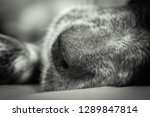 close up of english setter... | Shutterstock . vector #1289847814