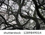 close up of curved nude tree... | Shutterstock . vector #1289849014