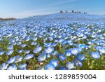 mountain  tree and nemophila ... | Shutterstock . vector #1289859004