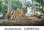 tiger | Shutterstock . vector #128989241