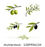 olive tree branch set. vector... | Shutterstock .eps vector #1289906134
