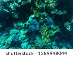 beautiful coral reef and...   Shutterstock . vector #1289948044