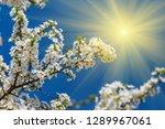closeup apple branch in a... | Shutterstock . vector #1289967061