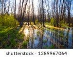 evening scene  flooded spring... | Shutterstock . vector #1289967064