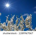 spring apple tree branch in a... | Shutterstock . vector #1289967067