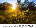 forest glade at the sunset ... | Shutterstock . vector #1289967247
