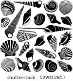 shell collection   vector... | Shutterstock .eps vector #129012857
