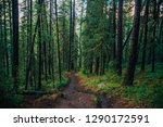 wet footpath through rainy... | Shutterstock . vector #1290172591