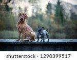 Friendship Between Dogs....