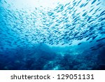 school of fish underwater | Shutterstock . vector #129051131