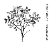 hand drawn bilberry bush wih... | Shutterstock .eps vector #1290534511