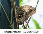 Closeup on a butterfly, St. Martin, Virgin Islands - stock photo