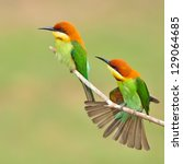 couple of bee eater bird | Shutterstock . vector #129064685