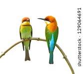 couple of bee eater bird on... | Shutterstock . vector #129064691