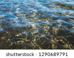 sandy seabed through... | Shutterstock . vector #1290689791