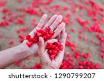 close up from above of young...   Shutterstock . vector #1290799207