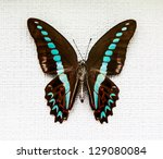 Exotic Butterfly Isolated On...