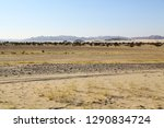 in the middle of the desert... | Shutterstock . vector #1290834724