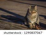 Cute Furry Homeless Cat Sits O...