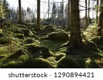 beautiful green mossy forest... | Shutterstock . vector #1290894421