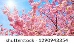 blossoming cherry trees with... | Shutterstock . vector #1290943354
