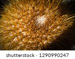 close up of the needles on top... | Shutterstock . vector #1290990247