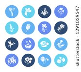 flora icon set and guzmania... | Shutterstock .eps vector #1291029547