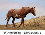 wild horse cloud  a stallion of ...   Shutterstock . vector #1291105531