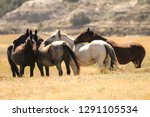 wild horse heard of theodore...   Shutterstock . vector #1291105534