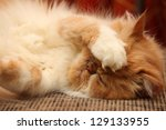 Stock photo portrait of a beautiful fluffy cat closeup 129133955