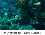 tropical fish on coral reef in...   Shutterstock . vector #1291468054
