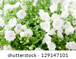 Field of white flowers, selective focus, shallow dof - stock photo