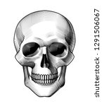 human skull full face. horror... | Shutterstock . vector #1291506067