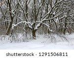 winter scene with oak trees in... | Shutterstock . vector #1291506811