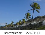 line of Palm trees in front of a blue sky - stock photo