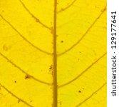 Fall Leaf Or Yellow Leaf...