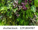 texture of living wall with... | Shutterstock . vector #1291804987