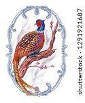 Pheasant Phasianus Colchicus ...