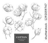 hand drawn vector cotton...   Shutterstock .eps vector #1292059747